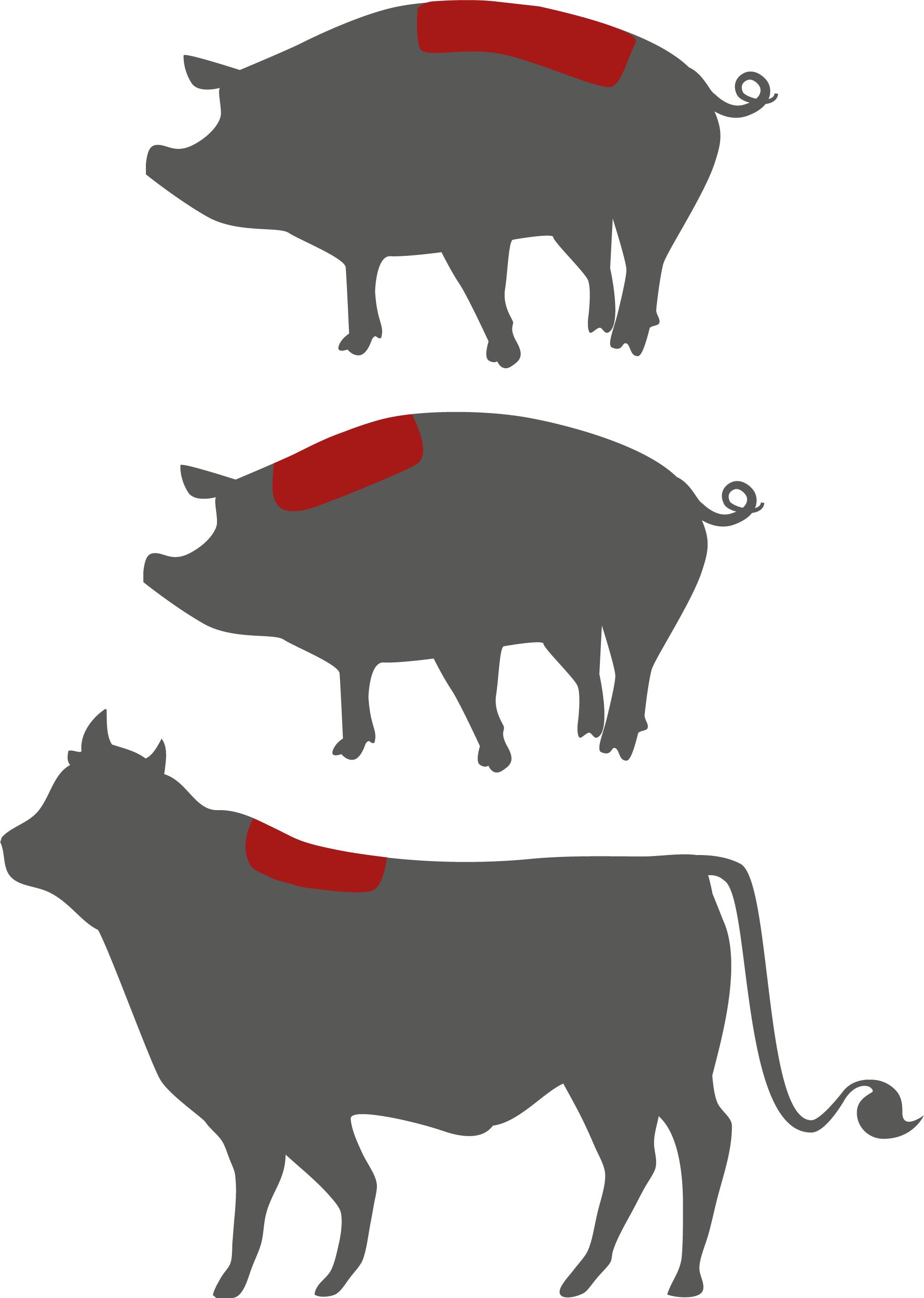 sinneswelt der tiere