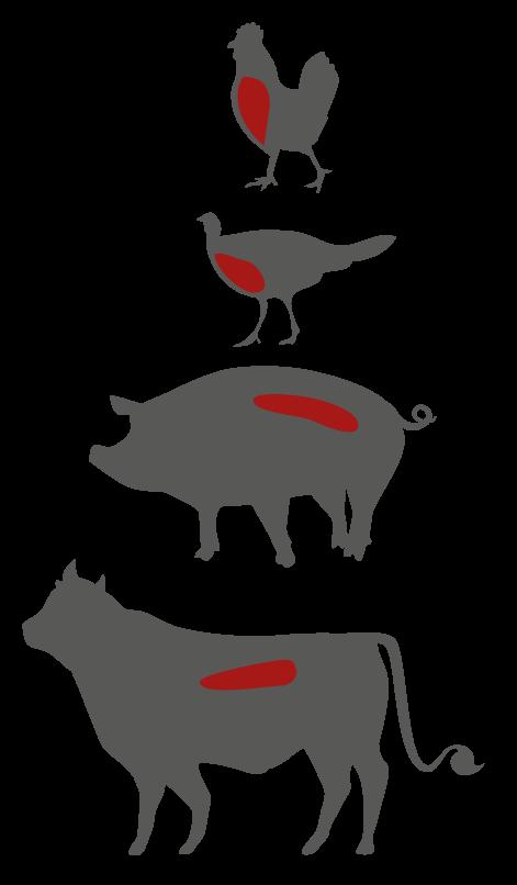 schwein wird geschlachtet